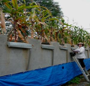 systèmes agricoles tropicaux