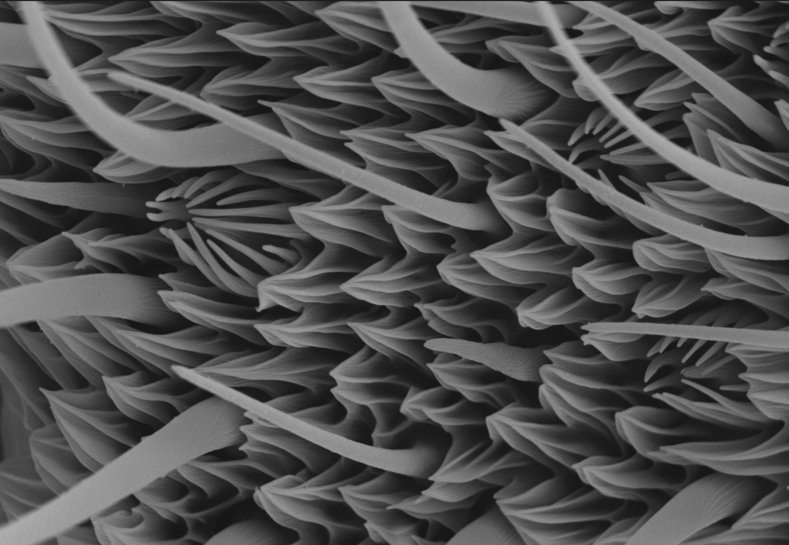Antenne de papillon au microscope électronique à balayage