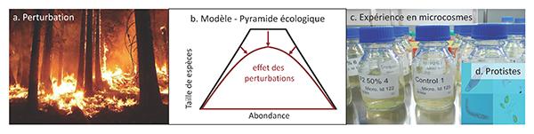 Les écosystèmes sont soumis à des perturbations de plus en plus fréquentes