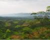 Paysage agricole asiatique