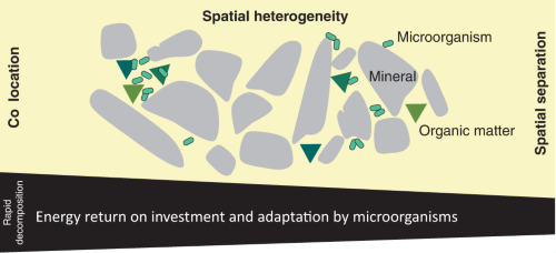 spatial heterogeneity