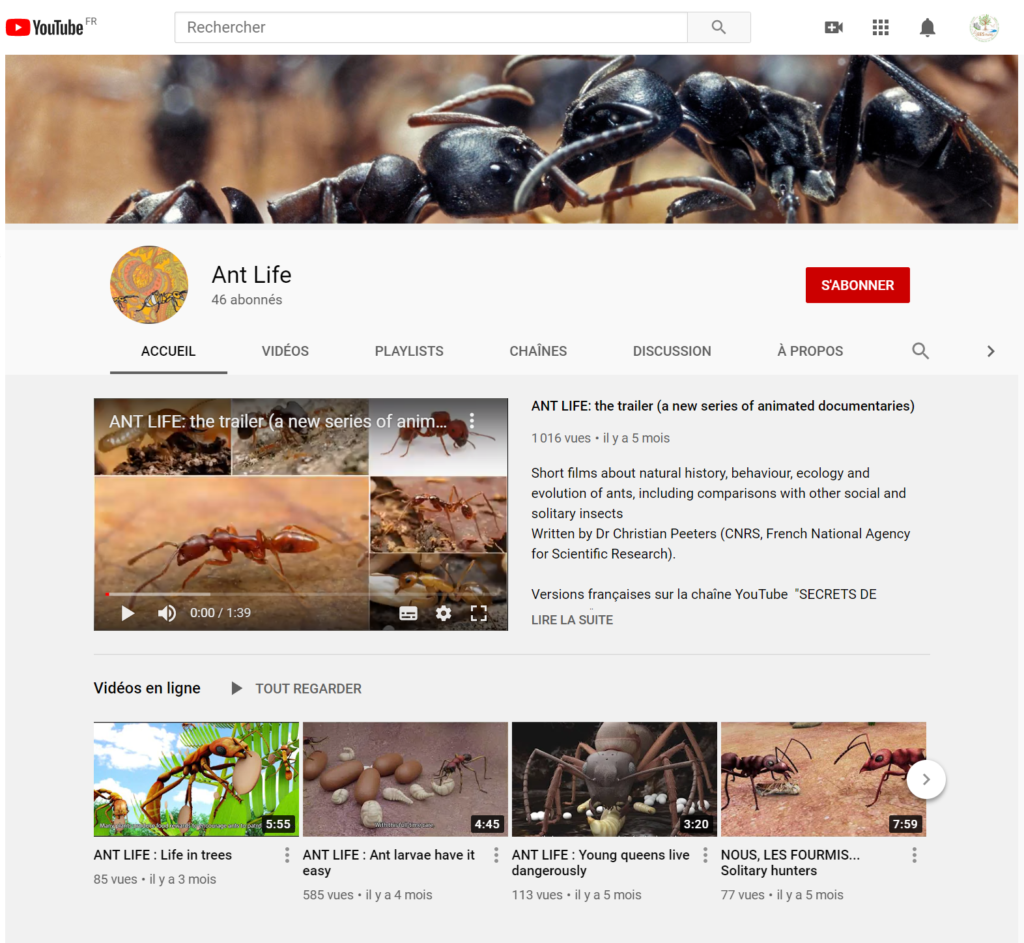Chaine youtube fourmis