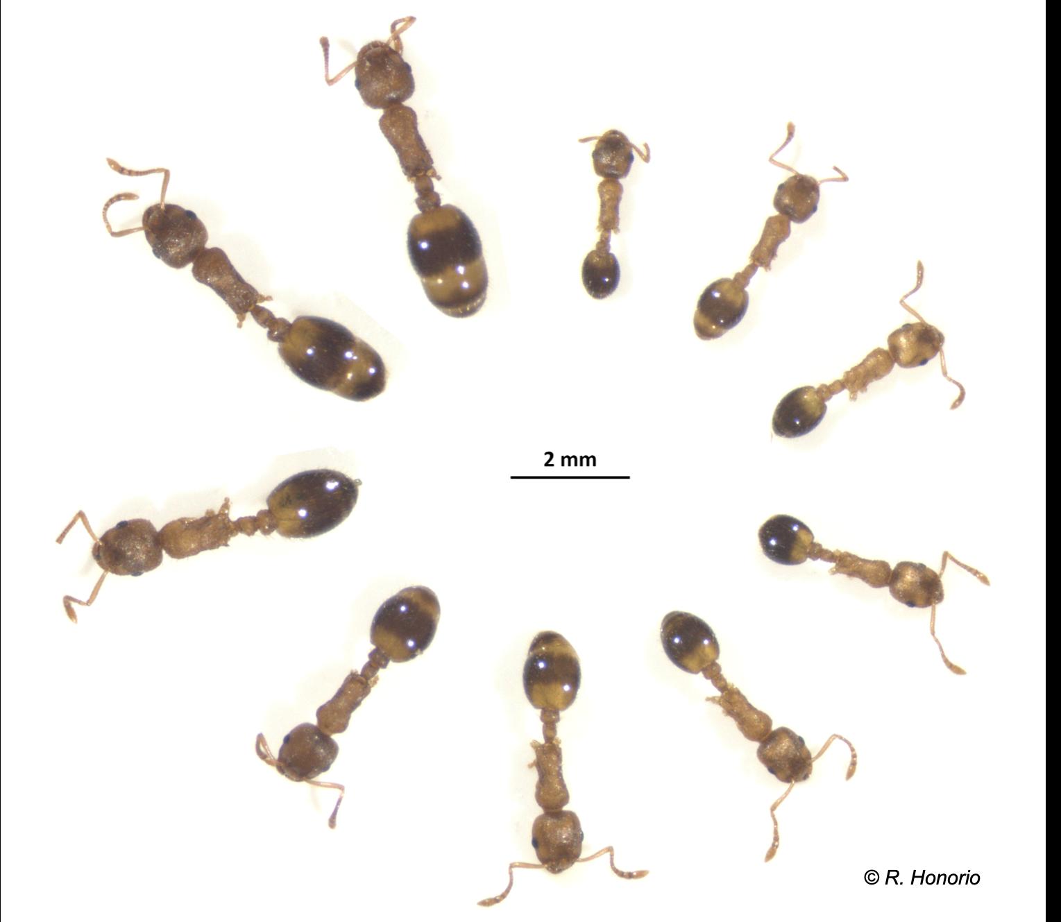 Diversite-corps-fourmi-en-cercle