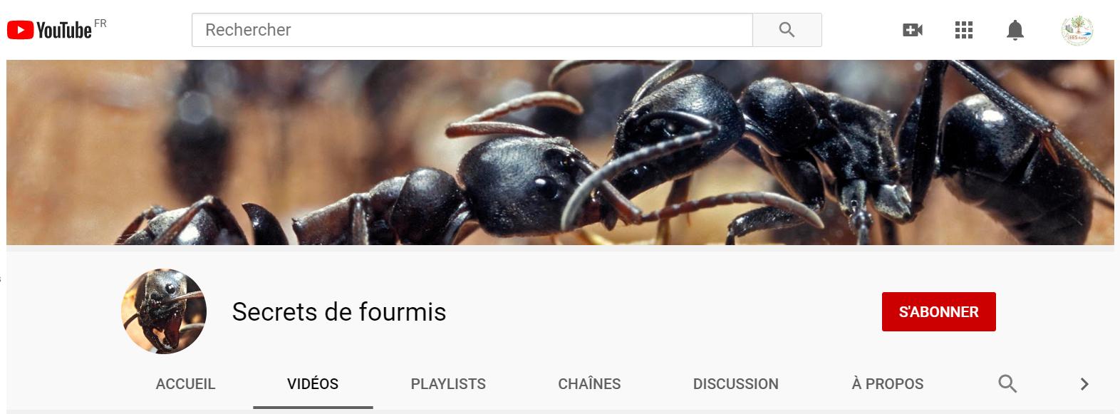 chaîne youtube fourmis