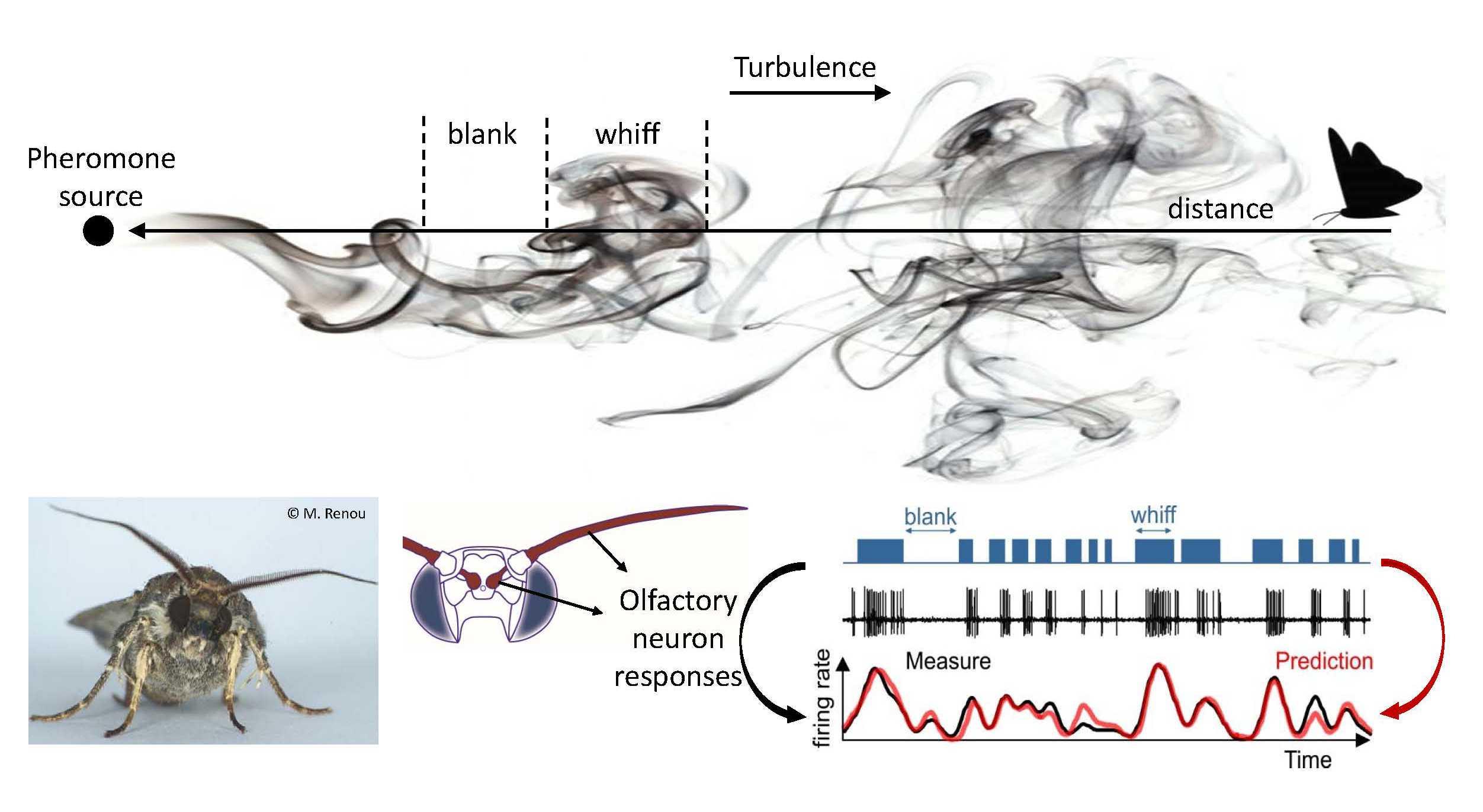 Coding turbulent odor plume