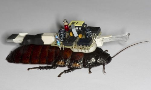 Cockroach-portable EAG